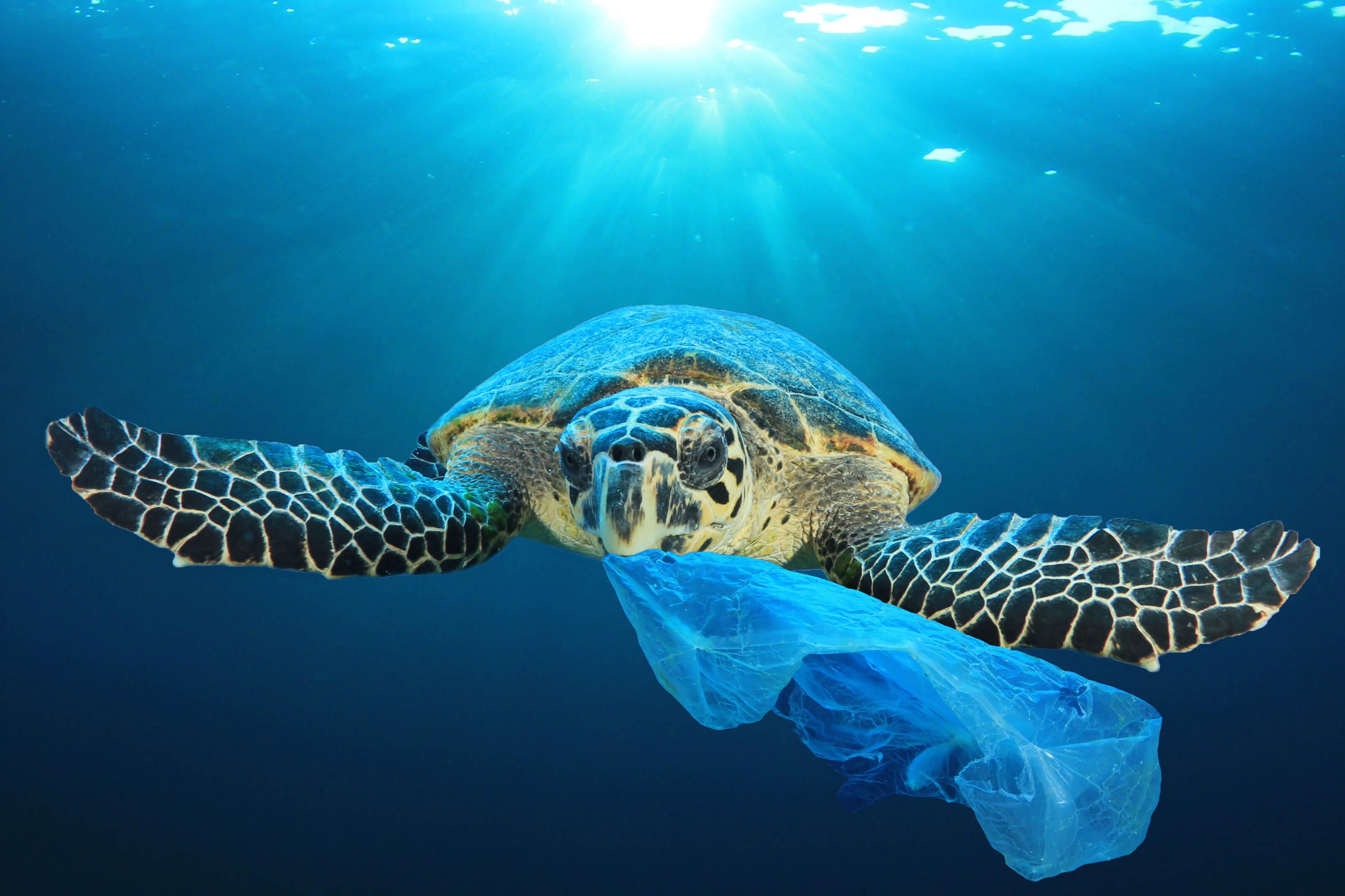 Marine Waste Turtle Eating Plastic